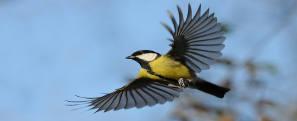 locomoção das aves