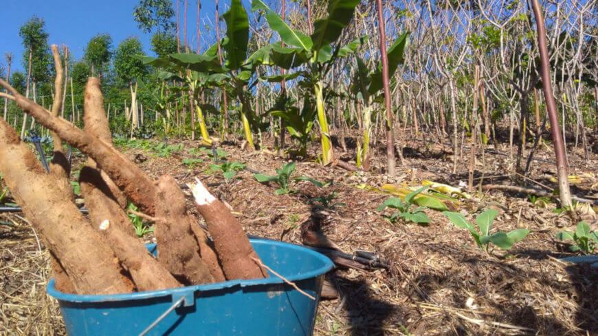 Os sistemas agroecológicos produzem em pequenas quantidades para o autossustento ou para a comercialização em pequena escala.