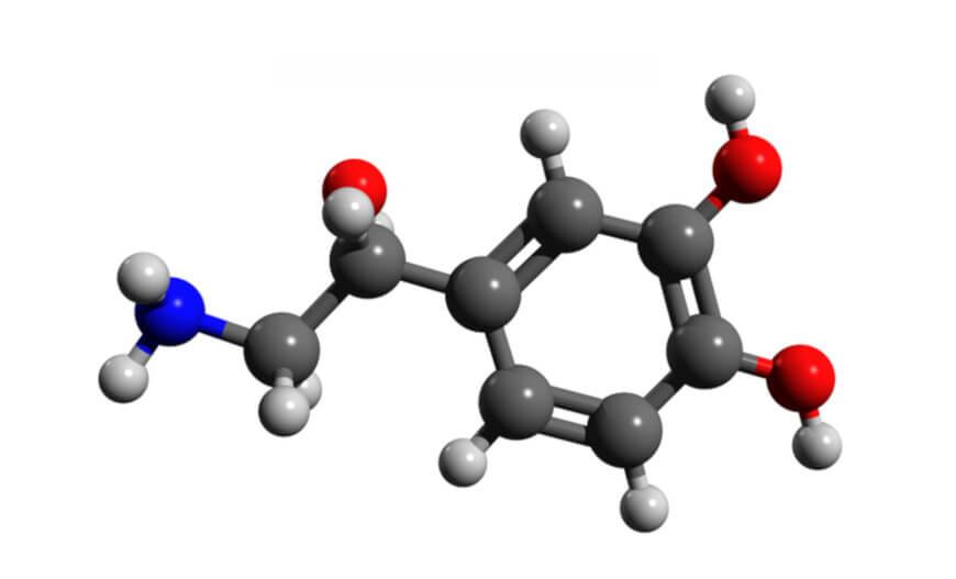 A noradrenalina é um hormônio da família das catecolaminas, também conhecidas como aminas biogênicas.