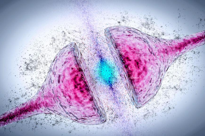 Os neurônios estabelecem a comunicação entre si por intermédio de sinapses. Essa comunicação pode ser mediada pelos neurotransmissores.