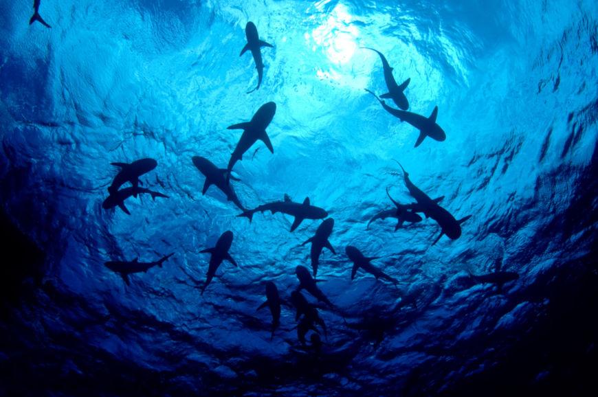 Os tubarões são peixes cartilaginosos e habitam os mais diversos ambientes oceânicos.