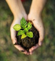 Mão segurando muda de planta