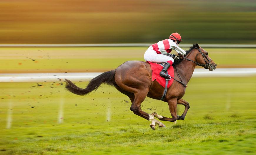Nos dias atuais, os cavalos são utilizados em diversas atividades, como no esporte.