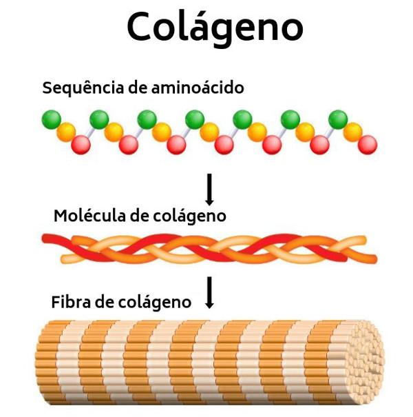 O colágeno é sintetizado com base nos aminoácidos.