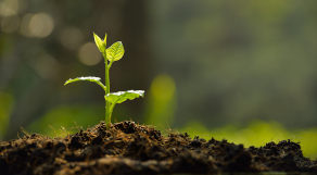 Broto de planta crescendo sob a terra
