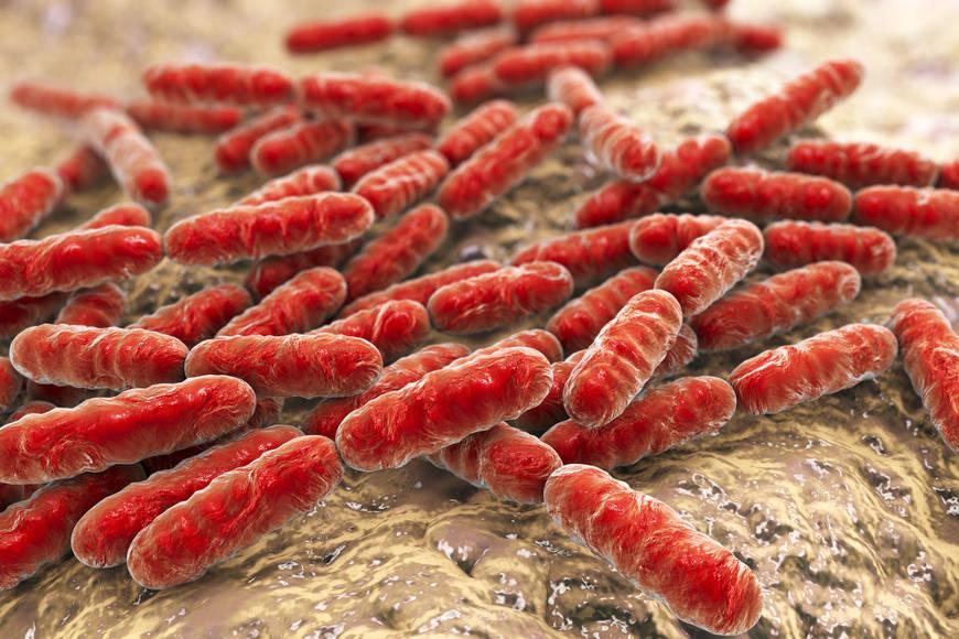 Dentre os benefícios do kefir, podemos destacar a sua ação probiótica.