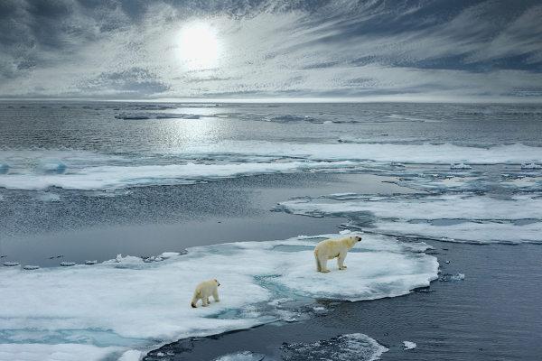 As mudanças climáticas podem causar alterações em habitat, causando a extinção de várias espécies.