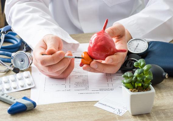 Médico segurando um protótipo e apontando onde a próstata fica localizada