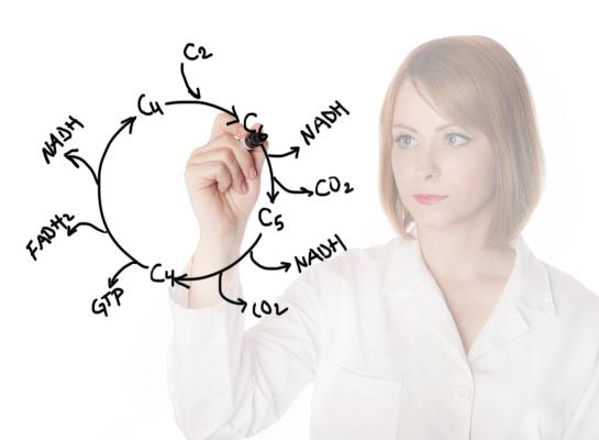 O ciclo de Krebs apresenta como produtos o CO2 e elétrons altamente energéticos, armazenados em moléculas carreadoras, como o NADH.