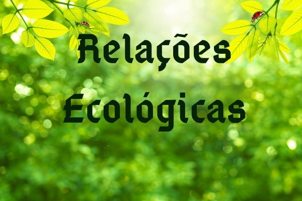 As relações ecológicas ocorrem entre indivíduos de uma mesma espécie (relações intraespecíficas) ou de espécies diferentes (relações interespecíficas).