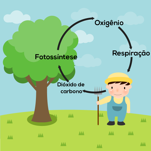 No ciclo do oxigênio, o oxigênio é produzido por meio da fotossíntese e consumido pelo processo de respiração.