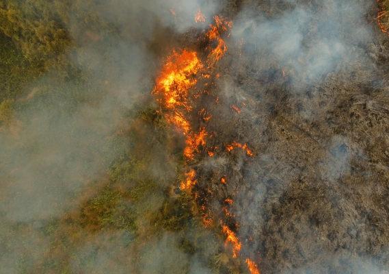 Visão aérea de florestando queimando