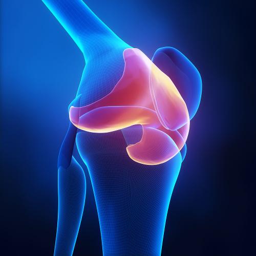 Uma das funções do tecido cartilaginoso é revestir articulações, de forma a facilitar o deslizamento e amortecer choques.