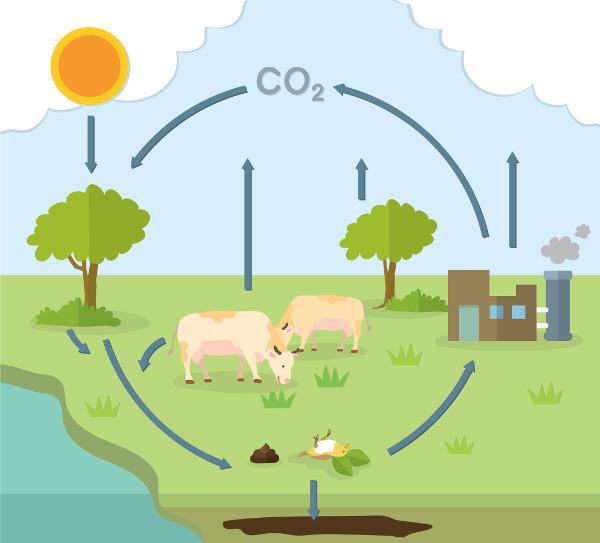 O carbono faz parte da composição dos seres vivos e seu ciclo é influenciado pelas atividades humanas.