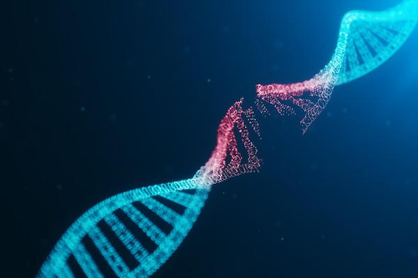 Alterações que surgem de forma natural ou induzida no material genético dos organismos são denominadas mutações.