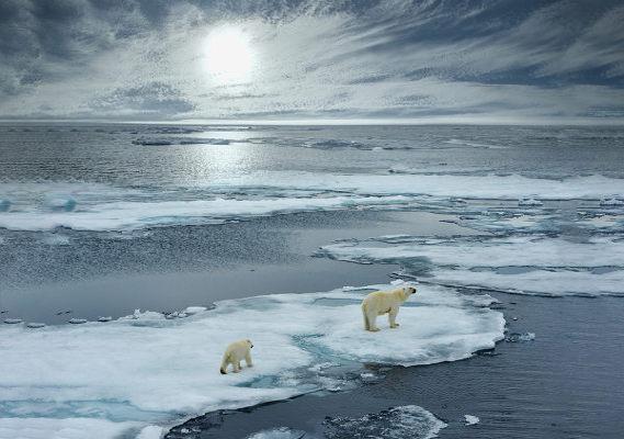 Ursos polares sob calotas de gelo derretando no oceano