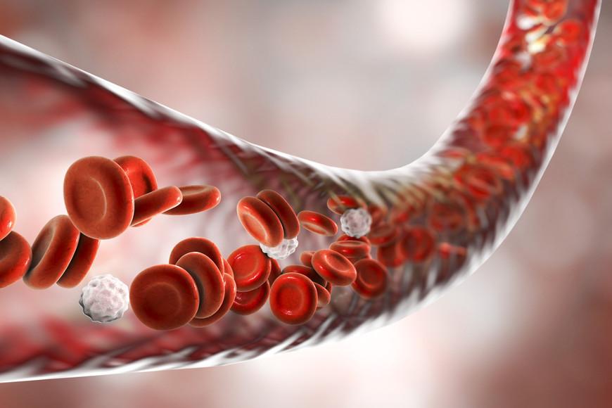 O tecido sanguíneo, como os demais tecidos conjuntivos, apresenta uma matriz extracelular abundante, a qual é constituída por água, sais e proteínas.