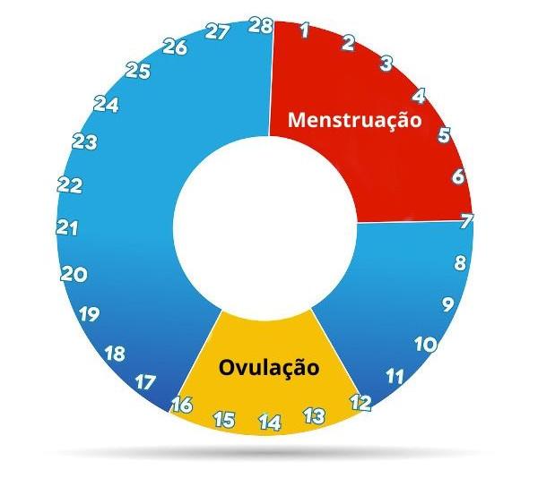 O ciclo menstrual, também chamado ciclo uterino, tem duração média de 28 dias.