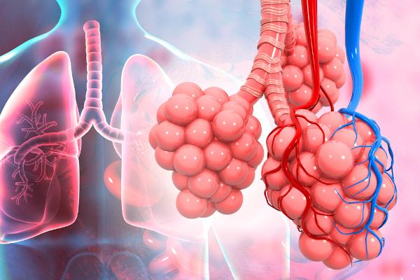 No interior dos pulmões, um órgão dos sistema respiratório, estão presentes os alvéolos, onde ocorrem as trocas gasosas.