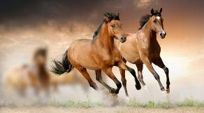 Dois cavalos correndo