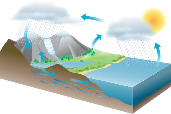 O ciclo da água envolve processos, como evaporação, condensação, precipitação e infiltração.