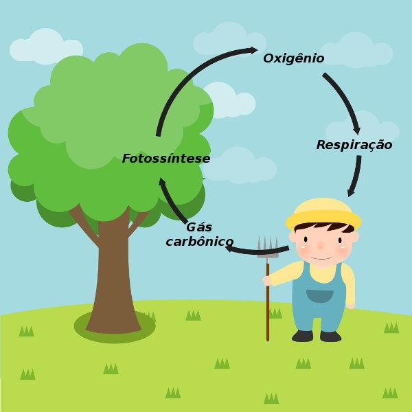 Os ciclos do oxigênio e do carbono estão interligados e envolvem processos, como a fotossíntese e a respiração.