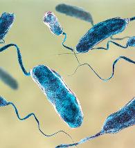 Ilustração da bactéria causadora da Cólera