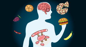 Ilustração de corpo humano rodeado de alimentos