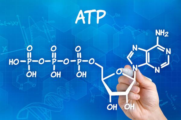 A produção de ATP é uma das finalidades do metabolismo. O ATP é uma molécula que fornece energia para a realização de diversas reações.