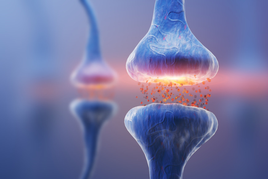 Sinapse é uma junção especializada onde ocorre a transmissão do impulso nervoso do neurônio para a célula-alvo.