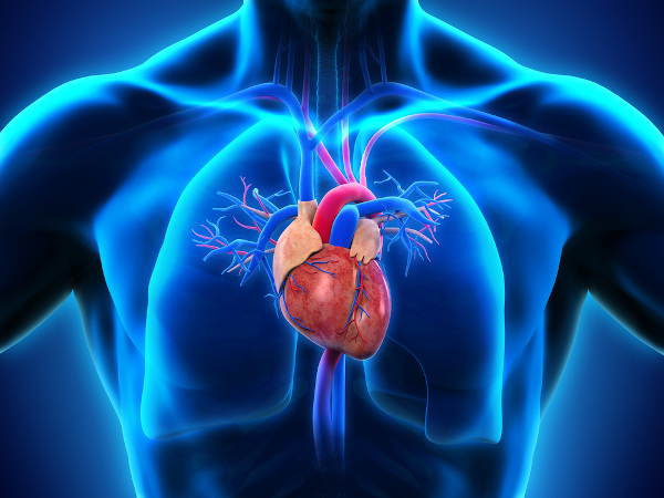 O sistema cardiovascular permite o transporte do sangue pelo corpo.