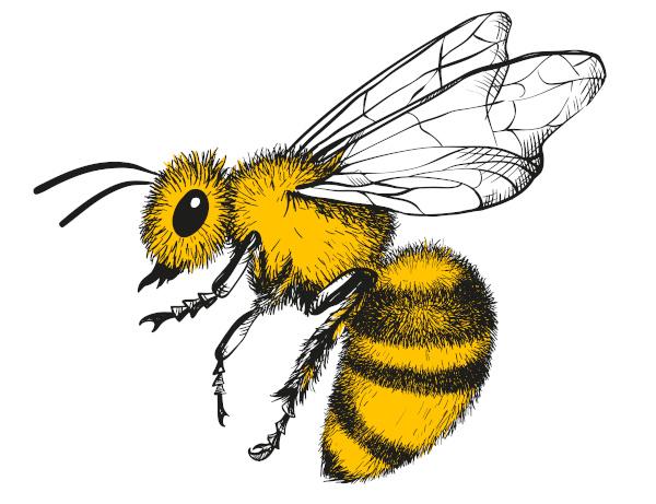 As abelhas apresentam o corpo dividido em cabeça, tórax e abdome.