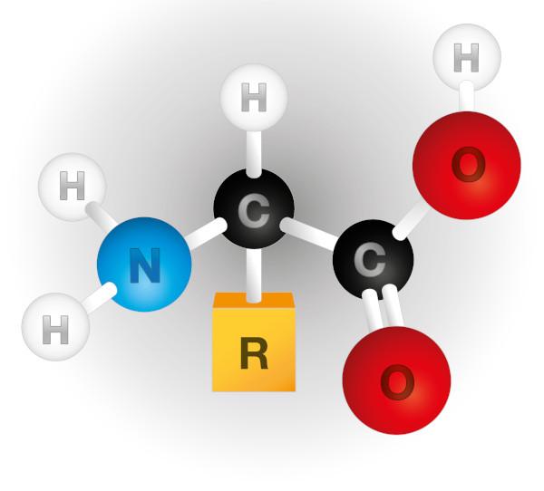 Aminoácidos são formados por um grupo carboxila (-COOH) e um amina (-NH2), ligados a um átomo de carbono (C), a um de hidrogênio (H) e a um radical (R).