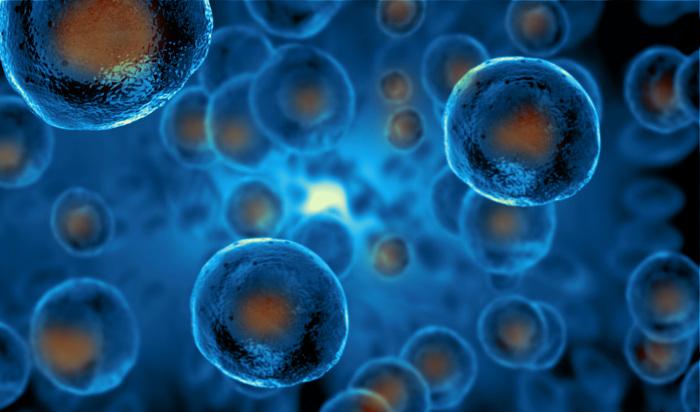 As células-tronco podem diferenciar-se em outros tipos celulares.