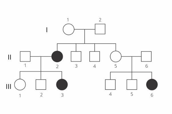 Os heredogramas permitem avaliar como ocorre a herança de algumas características.