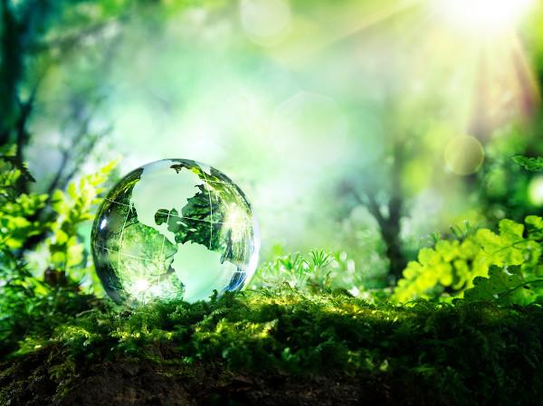 No Dia Mundial do Meio Ambiente, busca-se sensibilizar a população e elaborar ações que visem à preservação ambiental.