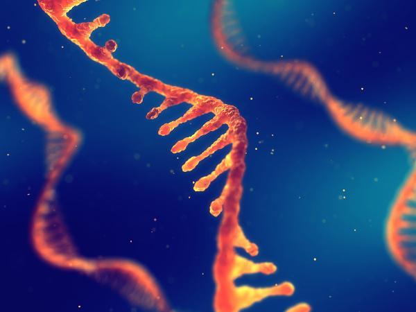 A transcrição é o processo responsável pela formação das moléculas de RNA.