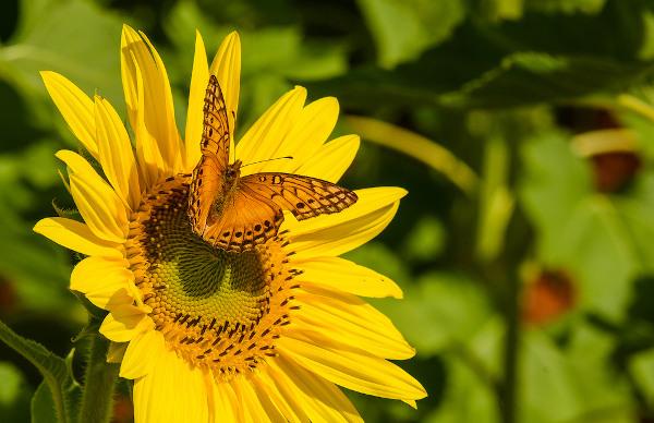 A borboleta é um dos representantes dos insetos, o grupo mais diverso entre os animais.