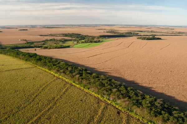 Os corredores ecológicos unem remanescentes florestais ou áreas de conservação fragmentadas pela ação antrópica.