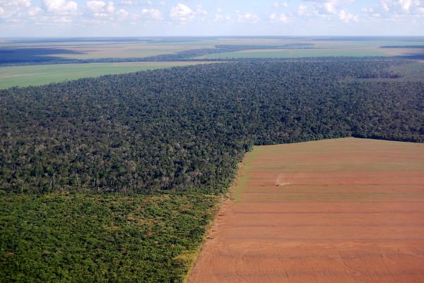 Com o aumento das atividades econômicas, áreas florestais são destruídas, dando lugar, por exemplo, à agricultura.