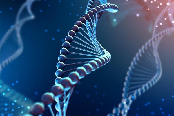 A variabilidade genética confere diferenças morfológicas e fisiológicas a indivíduos de uma mesma espécie.