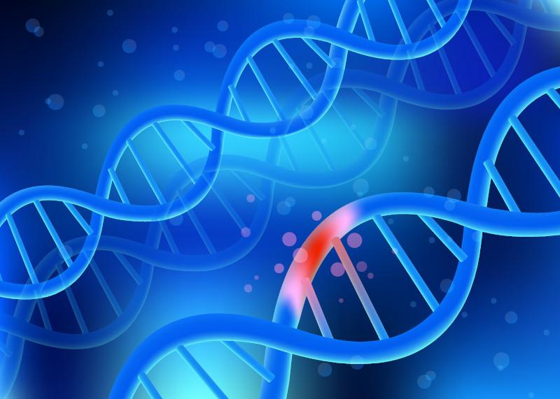 A mutação é o principal fator gerador de variabilidade genética.
