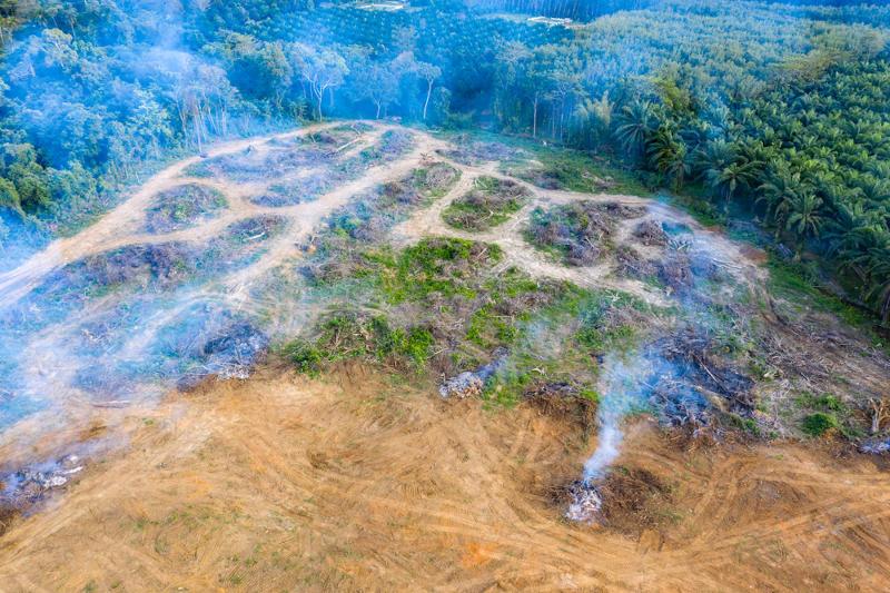 As queimadas elevam a concentração de CO2 na atmosfera.