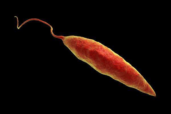 A leishmaniose é causada por protozoários do gênero Leishmania.