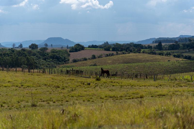 O Pampa tem sido alterado, transformando-se em áreas de lavoura e pastagem.