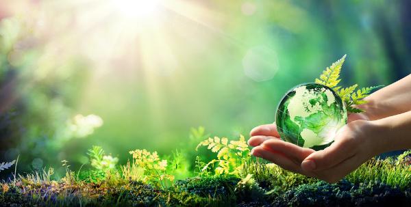 Ecologia é um dos conteúdos mais abordados nas avaliações do Enem.