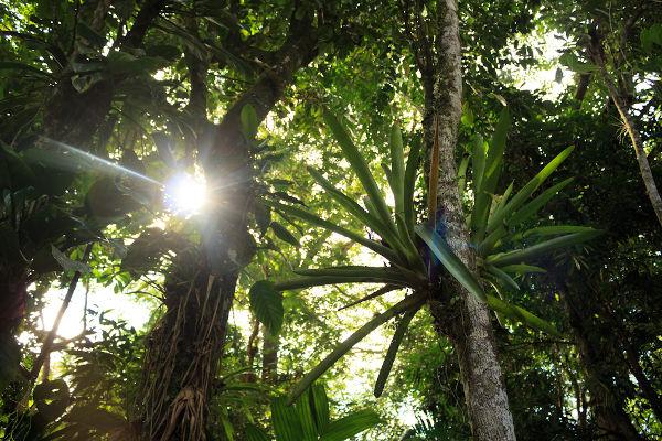 Na Mata Atlântica podem ser observadas árvores de médio e grande porte e epífitas.