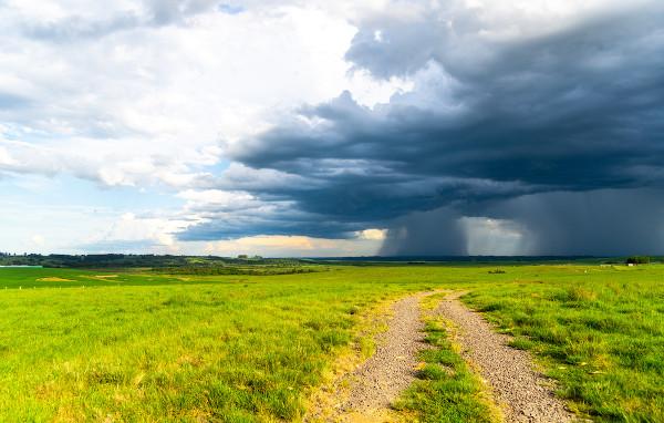 O Pampa apresenta relevo pouco acidentado e uma vegetação constituída por muitas espécies herbáceas.