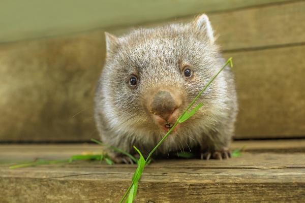 Na herbivoria, um organismo alimenta-se de algas ou plantas.