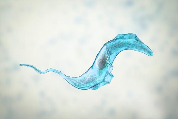 A doença de Chagas é causada pelo protozoário Trypanossoma cruzi.